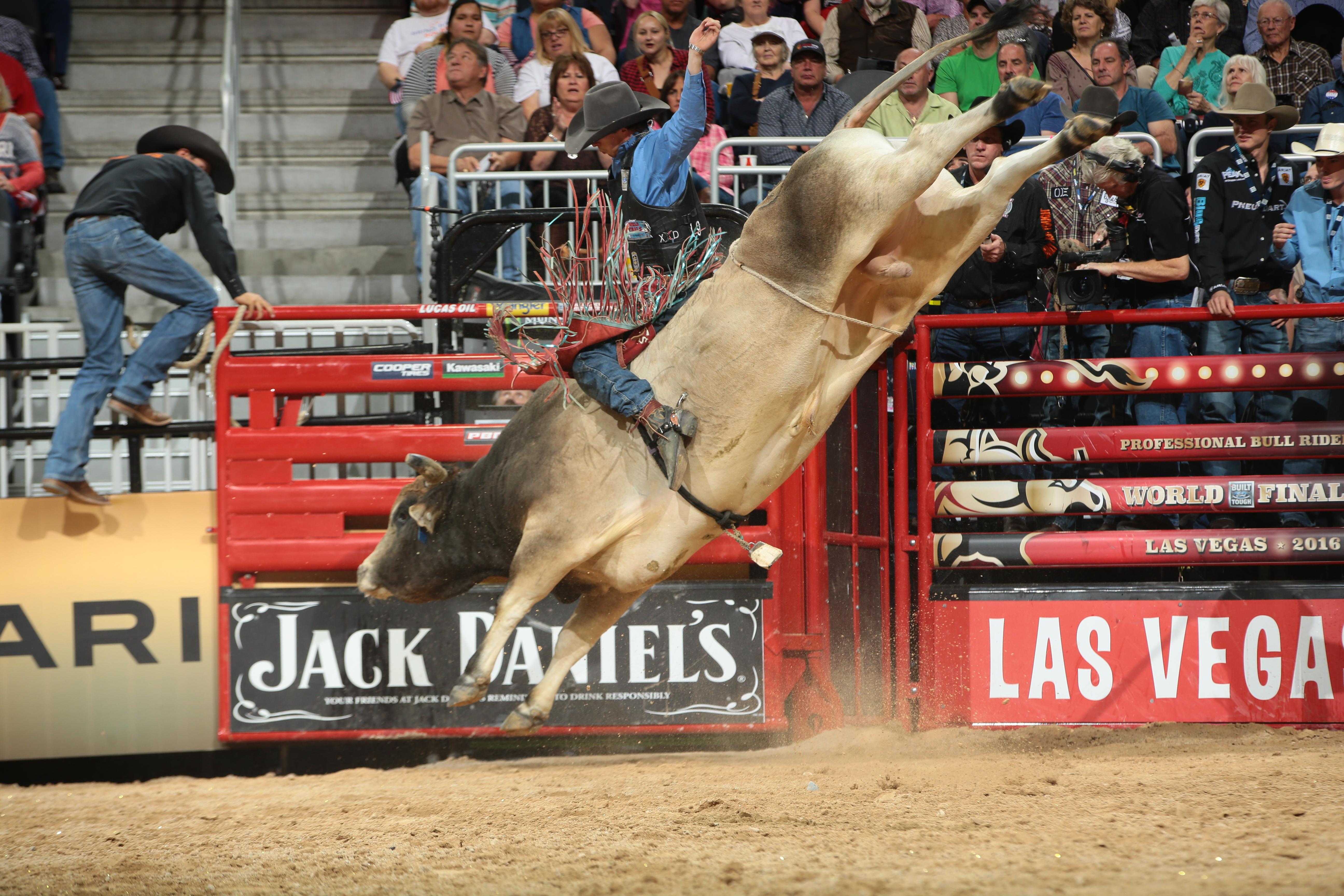Man on a bull