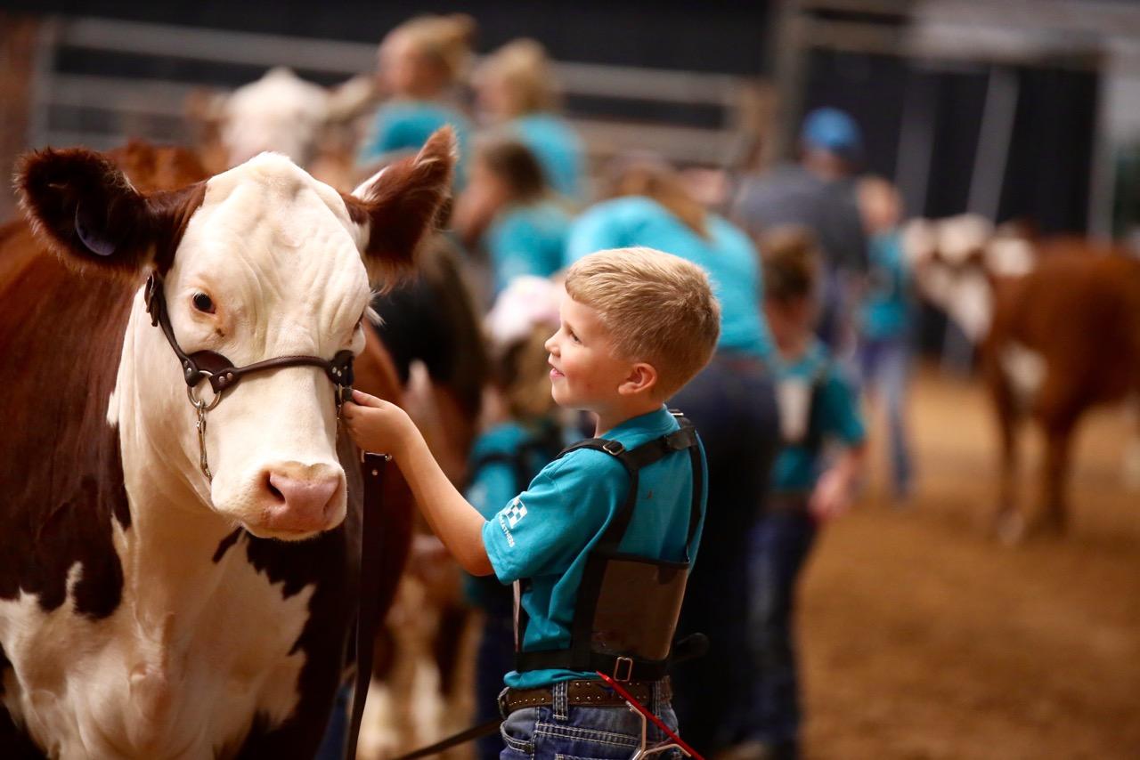 boy with a bull