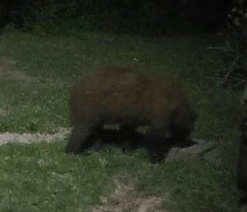 Black Bear Confirmed in Vanderburgh County