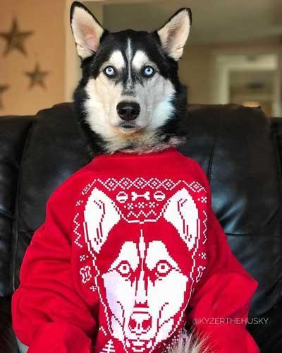 Cute Winter Husky Ugly Sweater