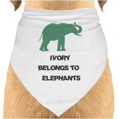 Elephant _1