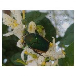 Citrus beetle