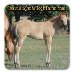 LMM#124 magnet, red dun filly