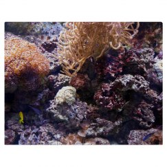 Coral Reef Puzzle with Oil Painting Effect