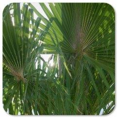 hummingbird & palm tree