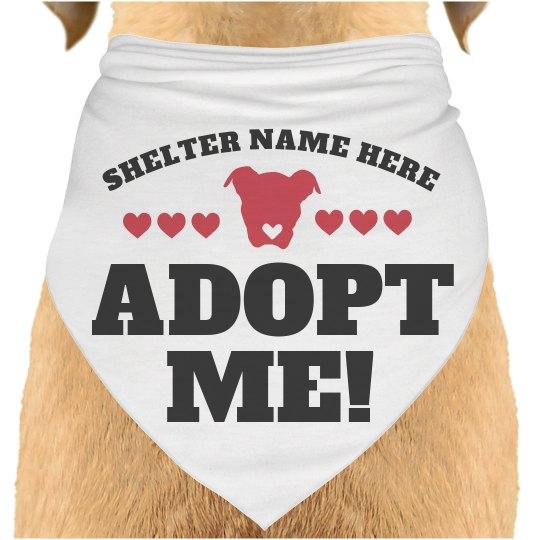 Animal Shelter Adoption