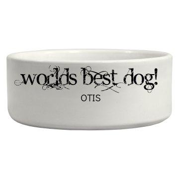 Best Dog Bowl