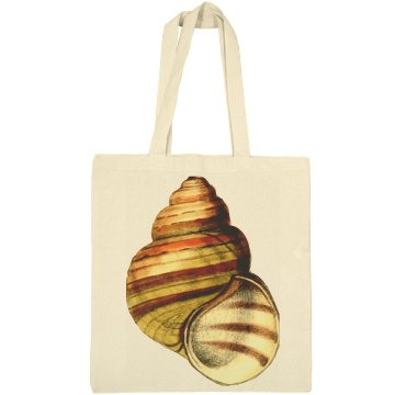 Brown Striped Seashell