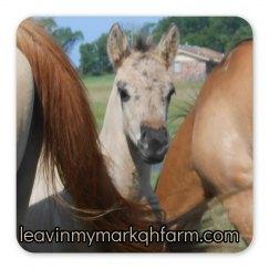 LMM#95 Smokin Blu Mark 2015 grulla colt