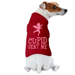Cupid Sent Me Dog