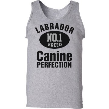 Labrador N0.1 Breed
