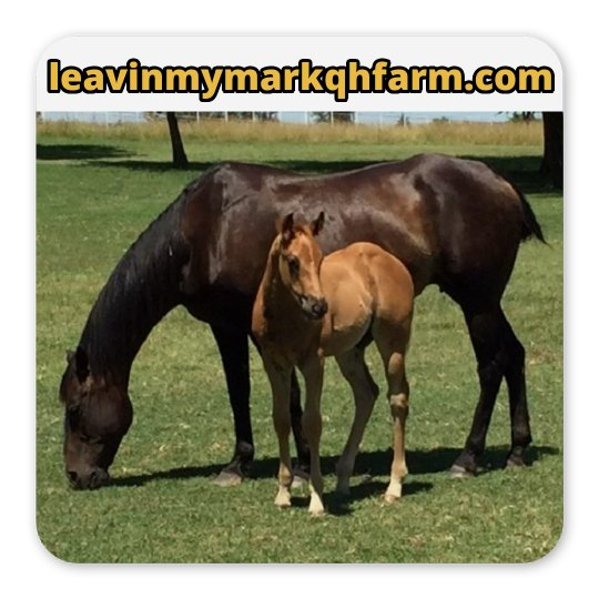 LMM #197 Chestnuts and Chexx 2017 sorrel colt