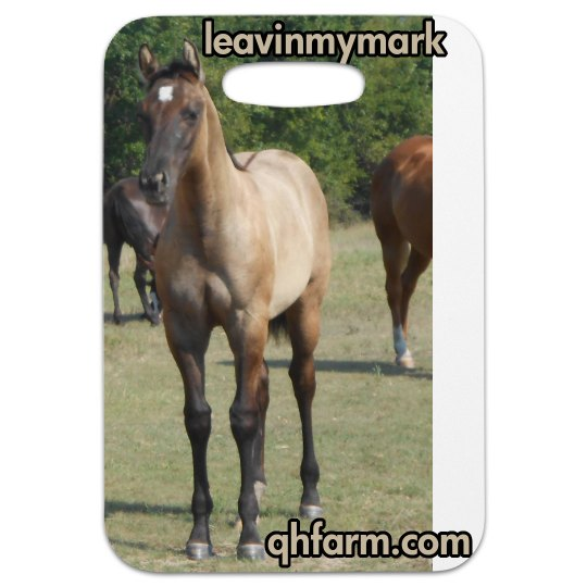 LMM#101 Fancy Square Pants 2015 grulla filly
