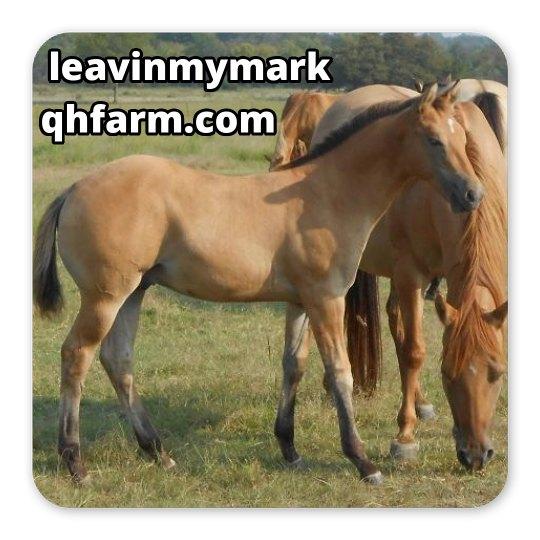 LMM#199 dun colt 2017