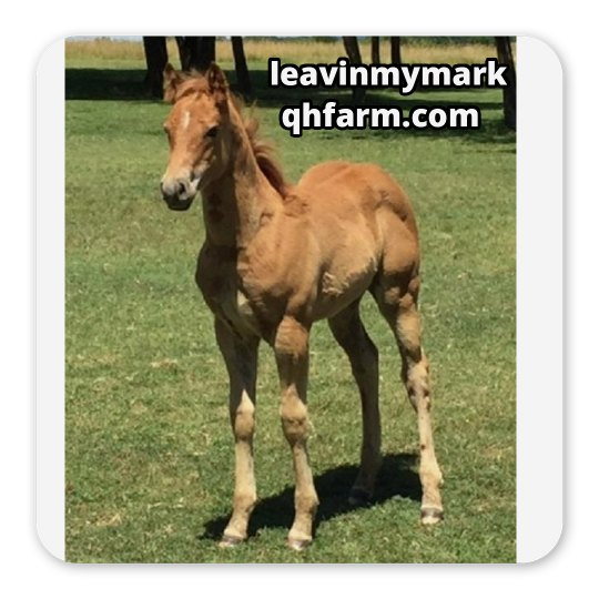 LMM#200  Full of Chexx 2017 sorrel colt