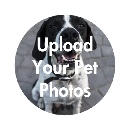 Upload Your Pet Photo Onto A Button