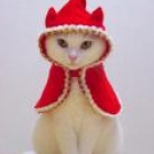 kitten_red, United Kingdom