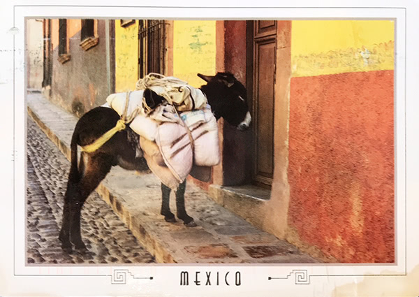 SimonBurrow's Burro postcard