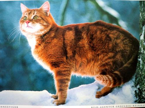 Ginger cat from Klaus :)