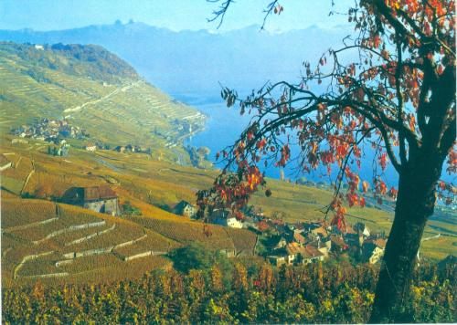 """The vineyards of Lavaux between Vevey and Lausanne,