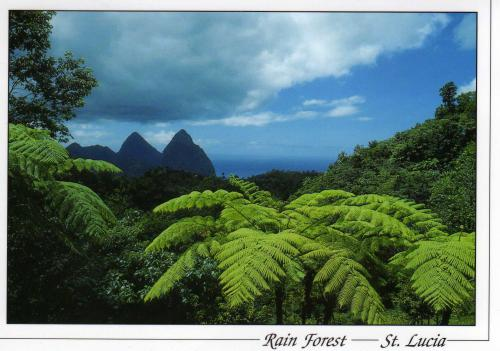 The Pitons, set off by tree ferns