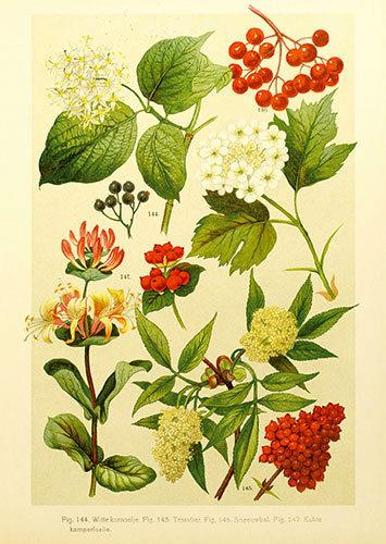 Botanical illustration.  On the back under the Air Mail sticker I noticed 1900.  I'm guessing that may be the date of the illustration.  It is beautiful.  The detail is startlingly fine, the colours are rich.