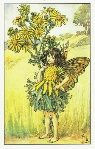 The Ragworth Fairy, from Flower Fairies of the Summer, 1925, by Cicely Mary Barker