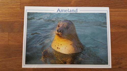 Seal - Zeehond in Dutch.