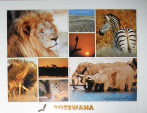 my first card from Africa