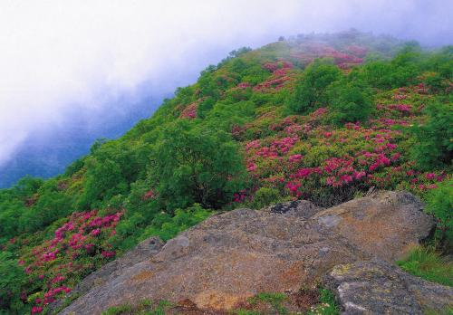 "Blue Ridge Parkway (North Carolina, USA) - ""Near milemarker 364, the parkway passes between Craggy Pinnacle and Craggy Dome, the two dominant peaks in Craggy Gardens where heath balds glow pink each June with Catawba rhododendron blooms."""
