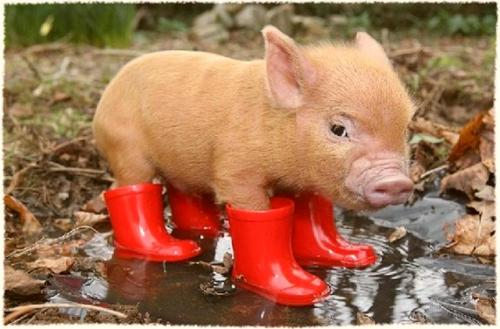 ... what a cute little piggy. Thanks so much for sending it to me, Stephan.
