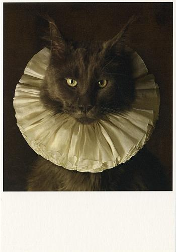 Cat with White Collar, 2010, by Marie Cecile Thijs