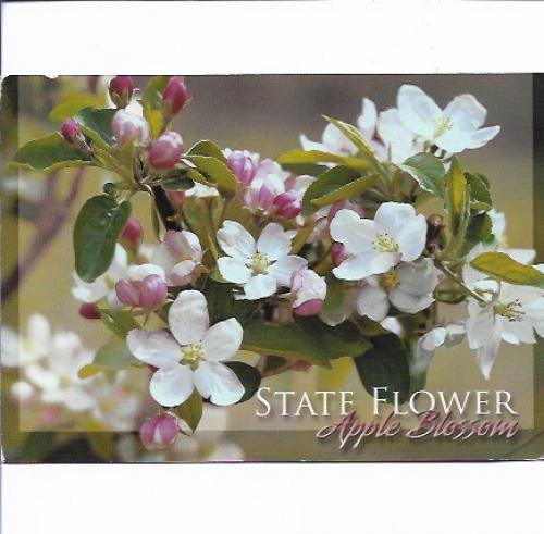 nmugirl from Traverse City in Michigan, USA send this card of the apple blossom to me.