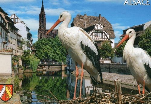 Gorgeous Storks that symbolize the region of Alsace France~~