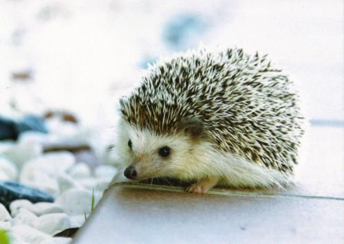 The sweetest hedgehog from Poland with a lot of beautiful stamps